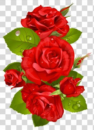 Rose Red Flower Clip Art - Red Rose Decoration Transparent Clip Art Image PNG