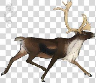 Reindeer DeviantArt Drawing Sketch - Reindeer PNG
