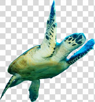 Loggerhead Sea Turtle Icon - Sea Turtle PNG