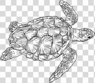 Loggerhead Sea Turtle Drawing Green Sea Turtle - Sea Turtle PNG