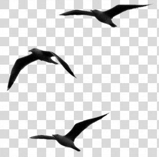 Respect Sentence Gulls Word Opinion - Pajaro PNG