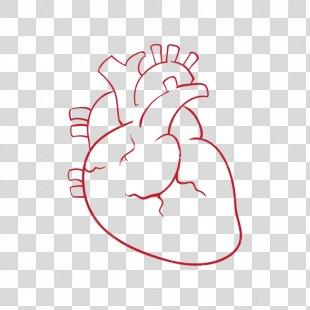 Heart Drawing Photography - Human Heart PNG