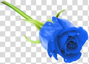 Blue Rose Flower Stock Photography Clip Art - Blue Rose Clip Art Image PNG