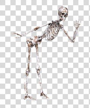 Skeleton Skull Bone Joint - Skeleton PNG
