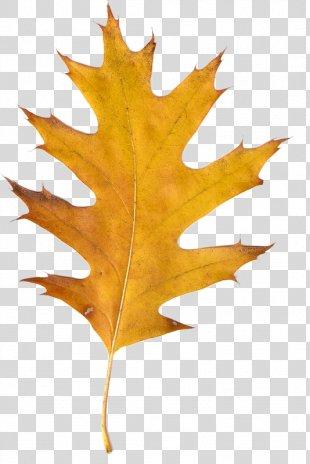 Autumn Leaves Clip Art - Autumn Leaves PNG