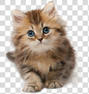 Cat Kitten Cuteness Clip Art - Cat PNG
