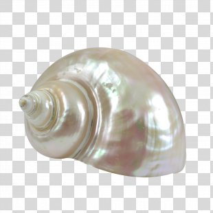 Seashell Turbo Marmoratus Sea Snail Shankha Conch - Seashell PNG