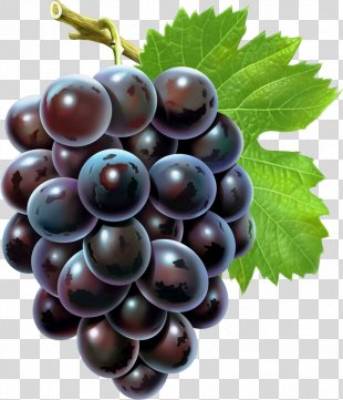 Grape Seed Extract Android Grape Seed Oil - Grapes PNG