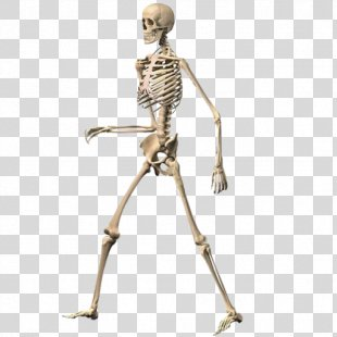 Skeleton Ragdoll, Walking Dead Human Skeleton Duck Farm - Skeleton PNG