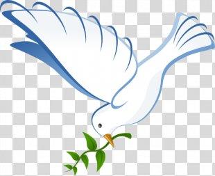 Columbidae Homing Pigeon Bird Beak Clip Art - Dove PNG