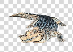 Sea Turtle Background - Sea Turtle Alligator PNG