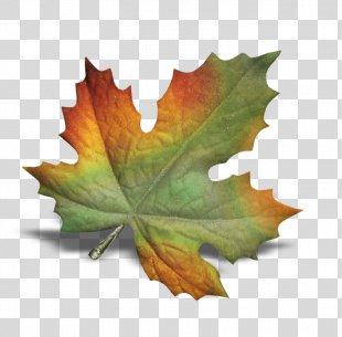POINT CEDRIC INFORMATIQUE Autumn Leaves Leaf - Autumn Leaves PNG