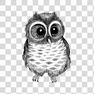 Owl Drawing Bird Black And White Photography - Black And White Line Drawing Big Eyes Owl PNG
