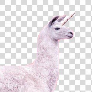 Unicorn Horn Llama Horse Invisible Pink Unicorn - Unicorn PNG