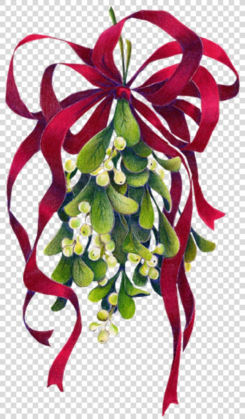 Mistletoe Christmas Phoradendron Tomentosum Clip Art, Mistletoe PNG