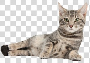 Cat Tree Kitten Scratching Post Feral Cat - Cat PNG