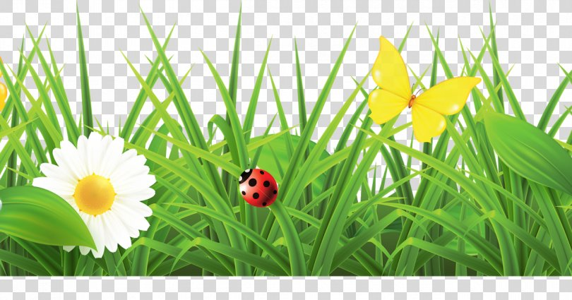 Vector Graphics Spring Flowers Galore & More Florist Illustration, Grass Border Texture PNG
