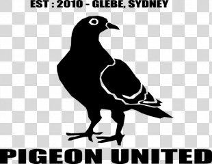 Homing Pigeon Columbidae Bird Pigeon Keeping Tumbler Pigeons - Pigeon Vector PNG