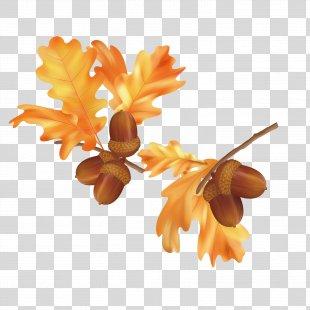 Autumn Leaf Color Autumn Leaf Color Euclidean Vector - Fall Leaves Pictures PNG