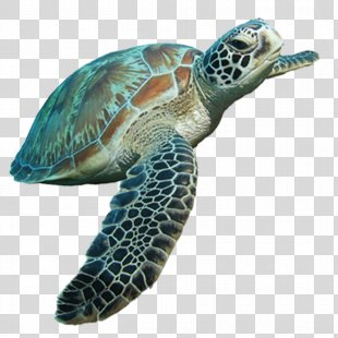 Loggerhead Sea Turtle Tortoise - Sea Turtle PNG