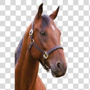 Horse Head Mask Mane Back Of Beyond Equine Centre - Horse PNG