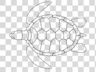 Green Sea Turtle Loggerhead Sea Turtle Hawksbill Sea Turtle - Sea Turtle Drawing Outline PNG