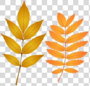 Autumn Leaf Color Clip Art - Fall Leaves Clip Art Image PNG