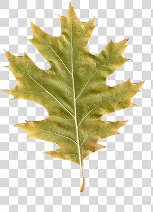 Autumn Leaves Maple Leaf PhotoScape Clip Art - Autumn Leaves PNG