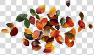 Clip Art Autumn Leaves Image Graphic Design - Autumn Leaves PNG