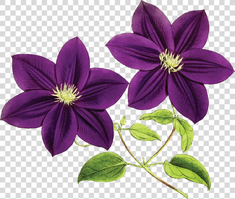 Purple Flower Violet Blue Clip Art, Sunflower Leaf PNG