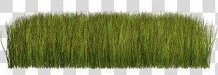 Grass Clip Art Herbaceous Plant Lawn - Grass PNG