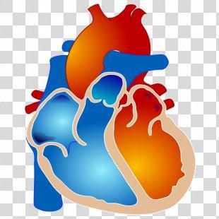 Tetralogy Of Fallot Congenital Heart Defect Cyanotic Heart Defect Ventricular Septal Defect - Human Heart PNG
