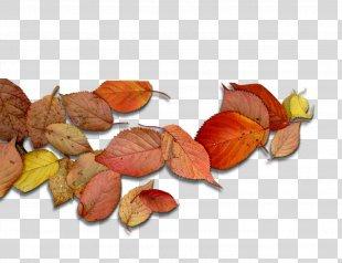 Deciduous Leaf Autumn Leaves - Autumn Leaves PNG