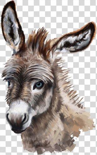 Donkey Stock Photography Drawing - Donkey PNG