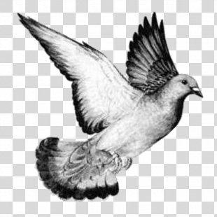 Columbidae Homing Pigeon Bird Drawing Release Dove - Bird PNG