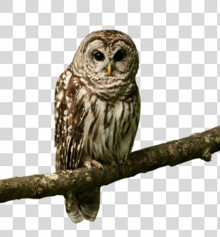 Owl Bird Desktop Wallpaper Image Desktop Metaphor - Owl PNG