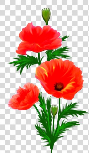Picture Frames Flower Photography Clip Art - Anemone PNG