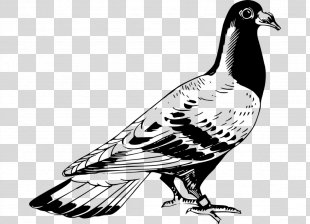 Columbidae Homing Pigeon Racing Homer English Carrier Pigeon Bird - Bird PNG