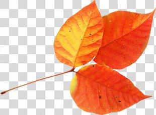 Autumn Leaves Leaf Clip Art - Autumn Leaves PNG