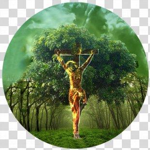 Bible Tree Of Life Garden Of Eden Genesis - Tree Of Life PNG