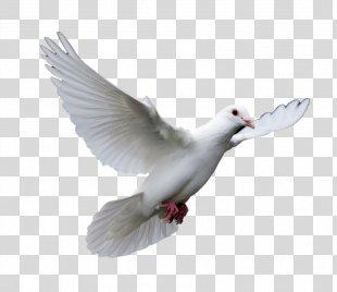 Pigeons And Doves Homing Pigeon Bird Racing Homer Release Dove - Bird PNG