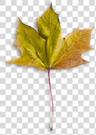 Autumn Leaves Maple Leaf Image File Formats - Autumn Leaves PNG