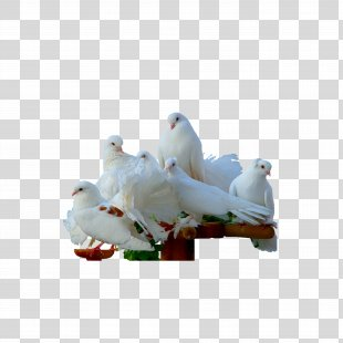 Homing Pigeon Namtsy Bird Psalms Psalm 55 - Pigeon PNG