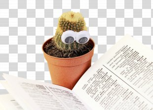 Books Cartoon - Succulent Plant Caryophyllales PNG