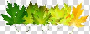 Autumn Leaf Color Green Clip Art - Green Autumn Leaves Transparent Clip Art Image PNG