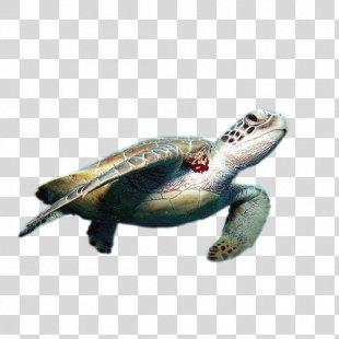 World Turtle Day Cheloniidae Green Sea Turtle Tortoise - Sea Turtle PNG