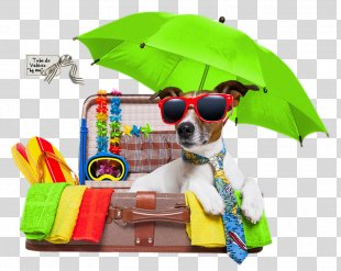 Vacation Jack Russell Terrier Puppy Pet Holiday - Vacation PNG