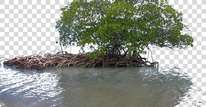 Mangrove Wetland Seagrass Ecology, Cuba PNG